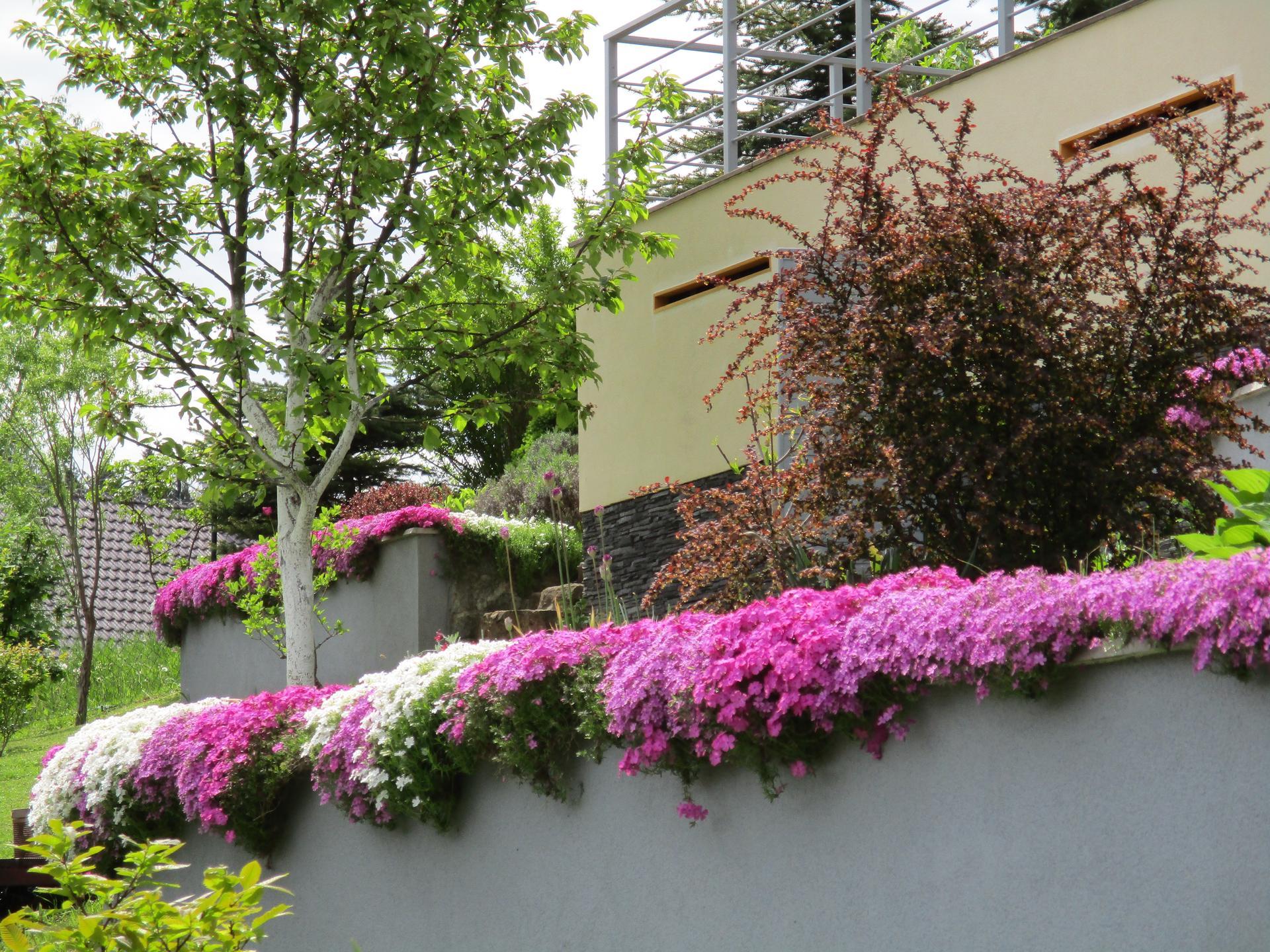 Jar v našej záhrade - Floxové vankúšiky sa pekne zahustili :)