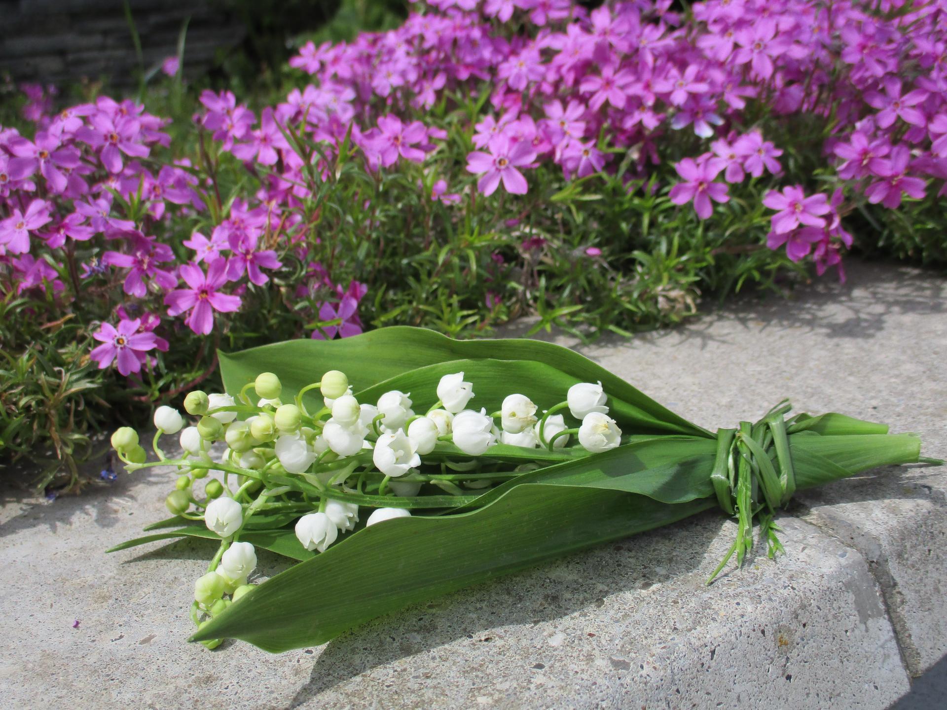 Jar v našej záhrade - Milujem konvalinky a ich úžasnú vôňu :)  Kytička pre všetkých,komu dokážu urobiť radosť :)