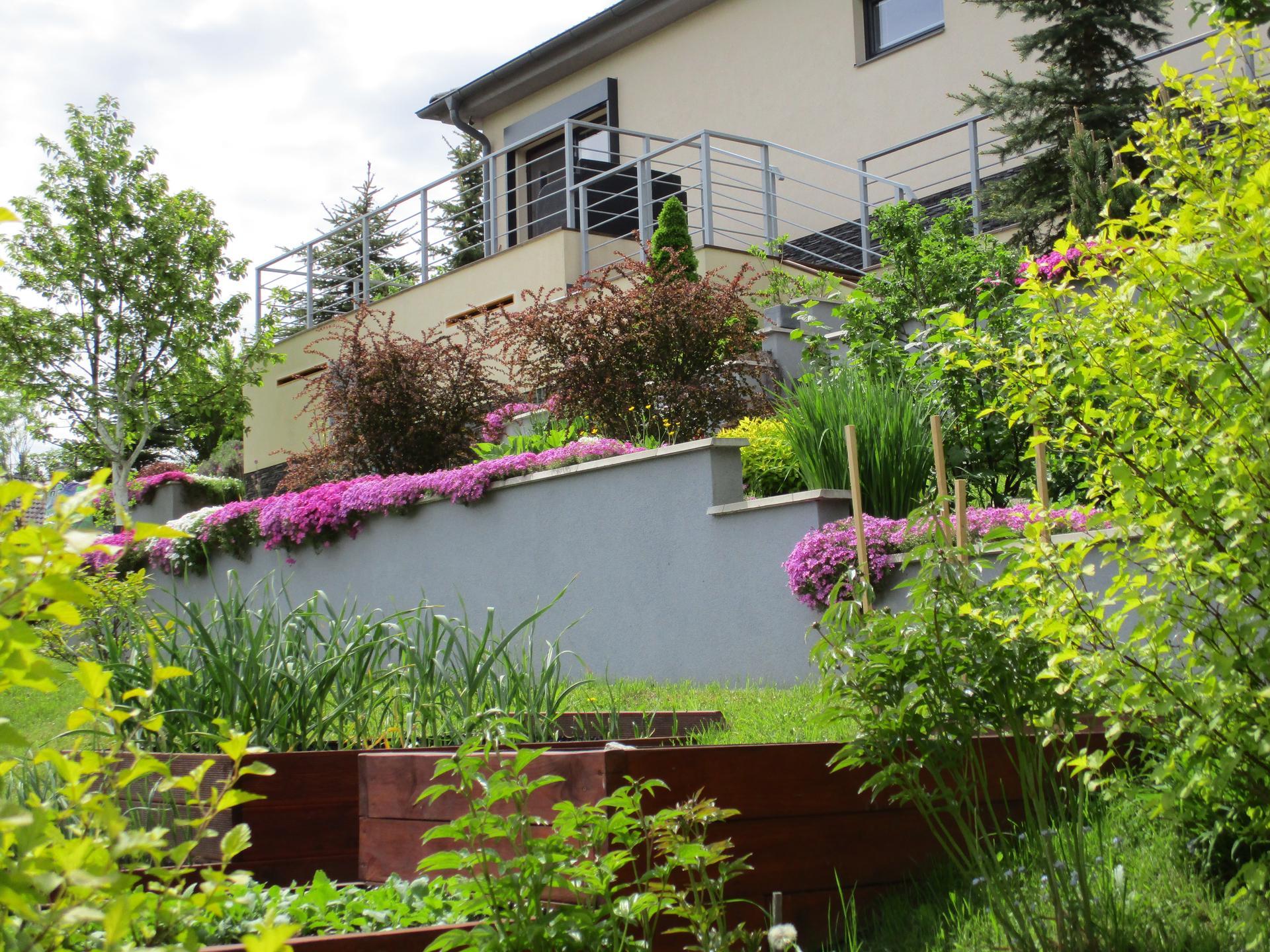 Jar v našej záhrade - Cesnaku sa darí :)