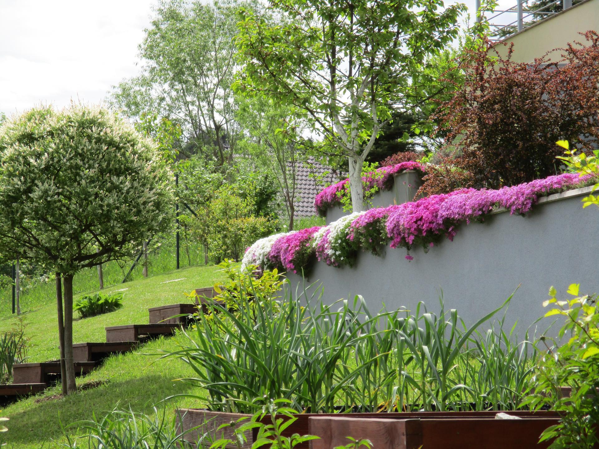 Jar v našej záhrade - Je to jesenný cesnak paličák :)