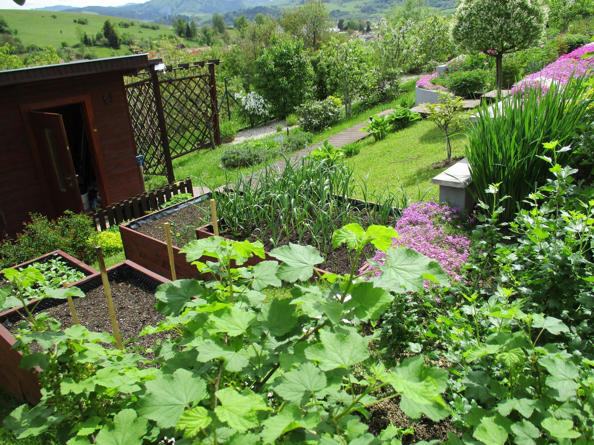 Jar v našej záhrade - Nad vyvýšenými záhonmi sa darí egrešom a ríbezliam :)