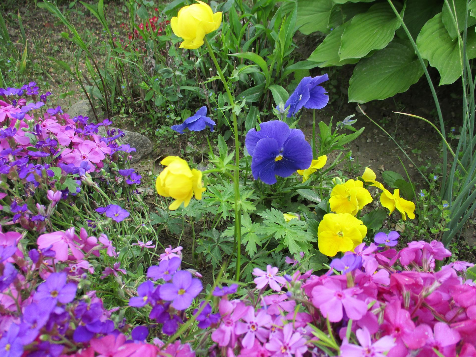 Jar v našej záhrade - Táto kombinácia farieb ma vždy dostane ;-)