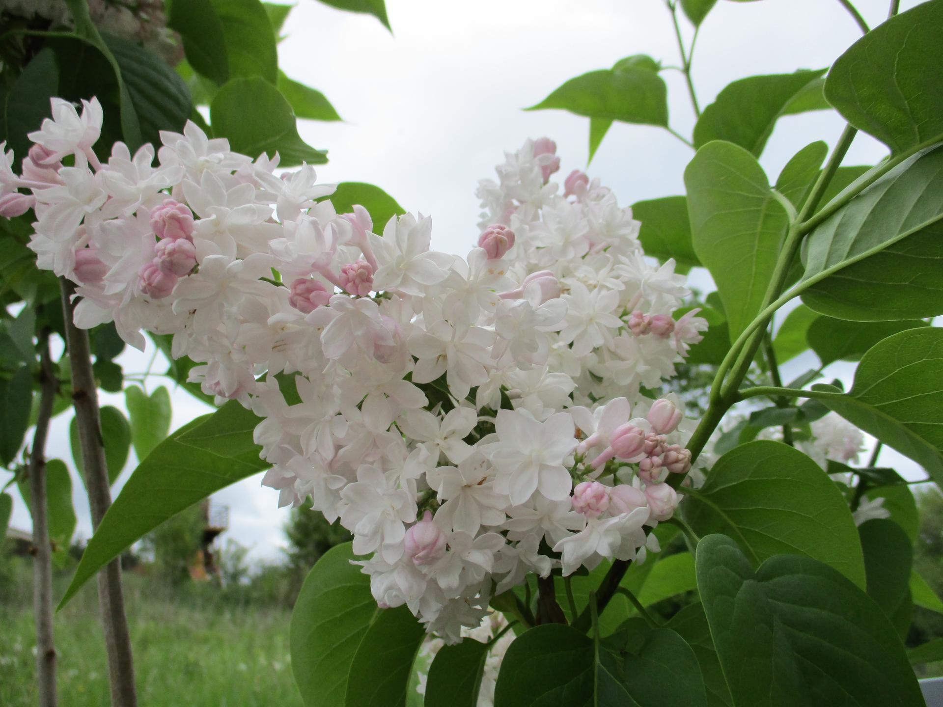 Jar v našej záhrade - Obrázok č. 70