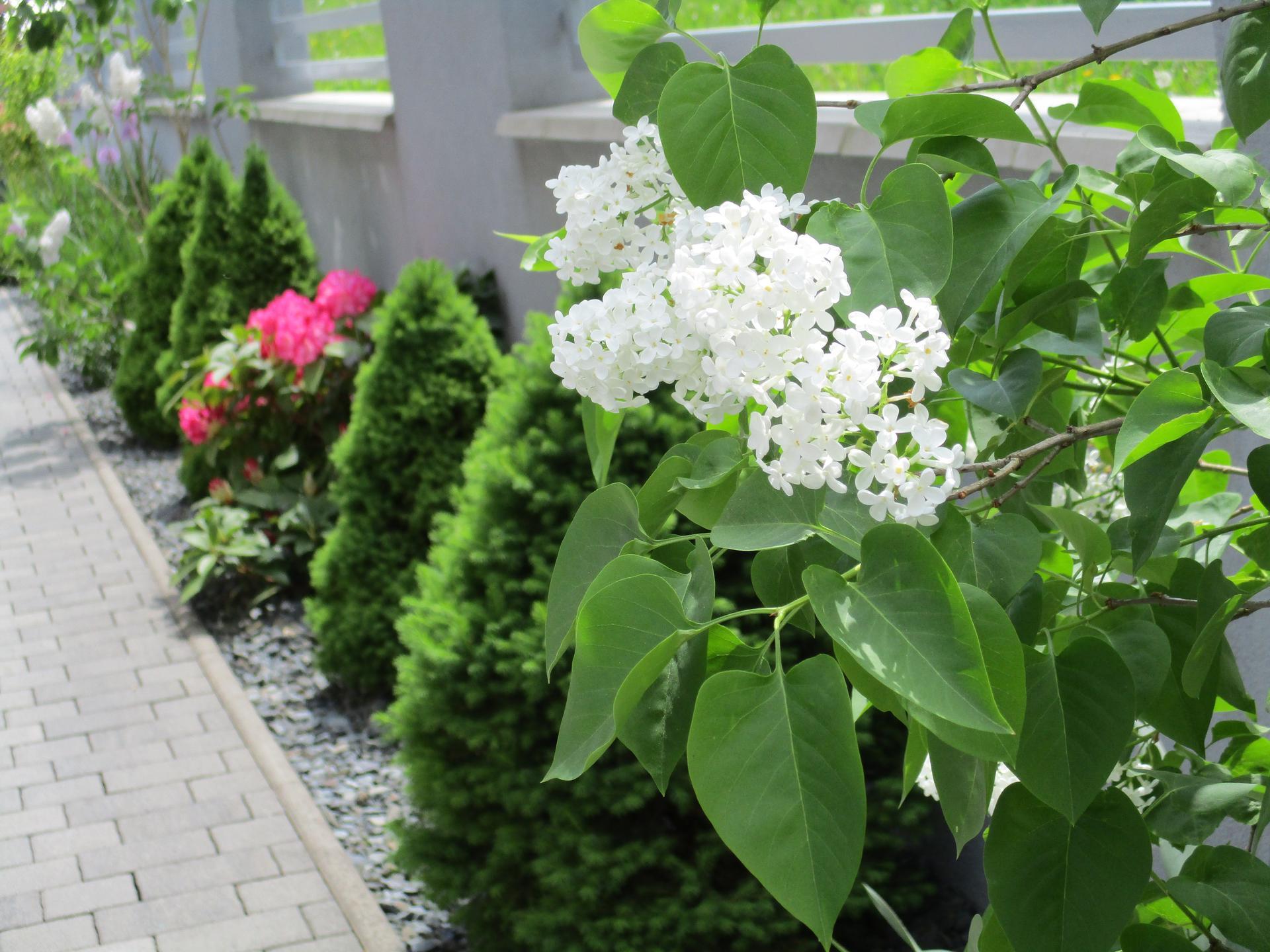 Čo je nové v našej záhrade - Obrázok č. 73