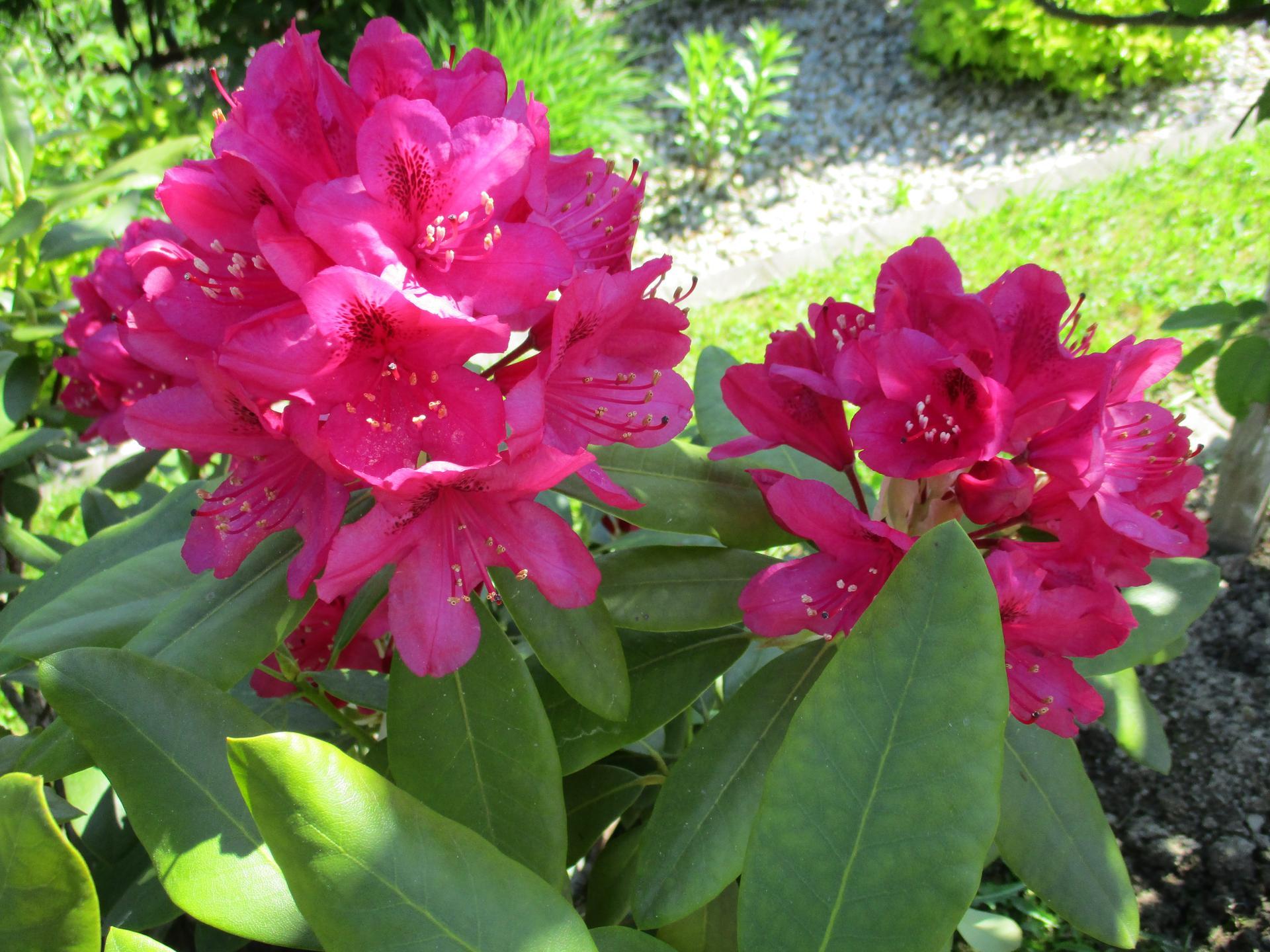 Jar v našej záhrade - Obrázok č. 75