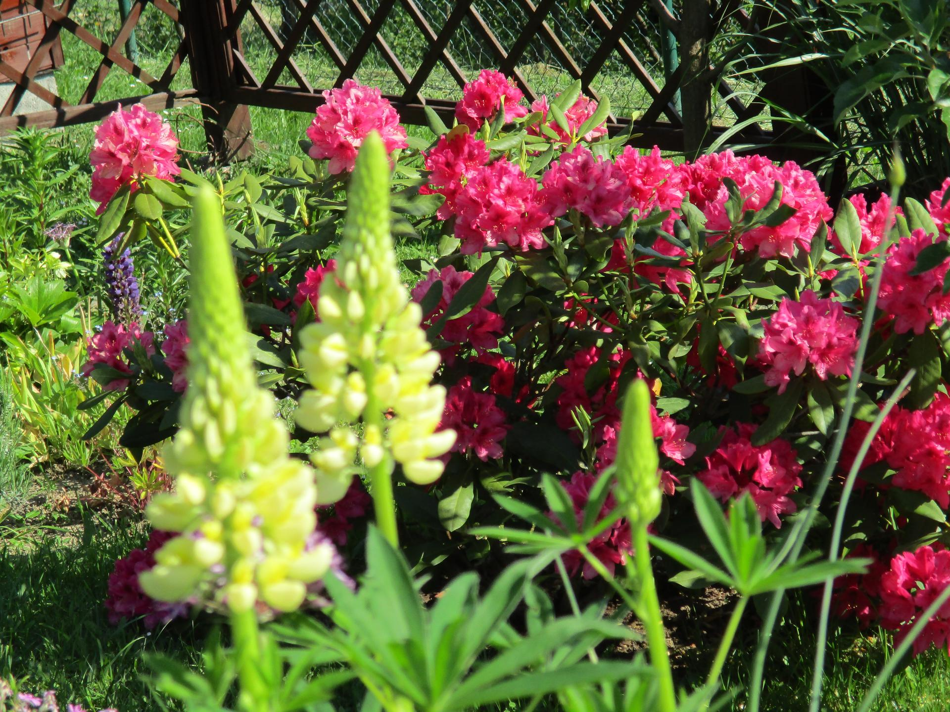 Jar v našej záhrade - Obrázok č. 80