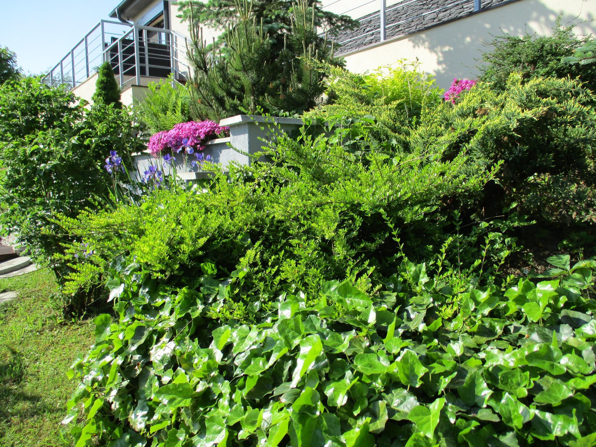 Jar v našej záhrade - Obrázok č. 81