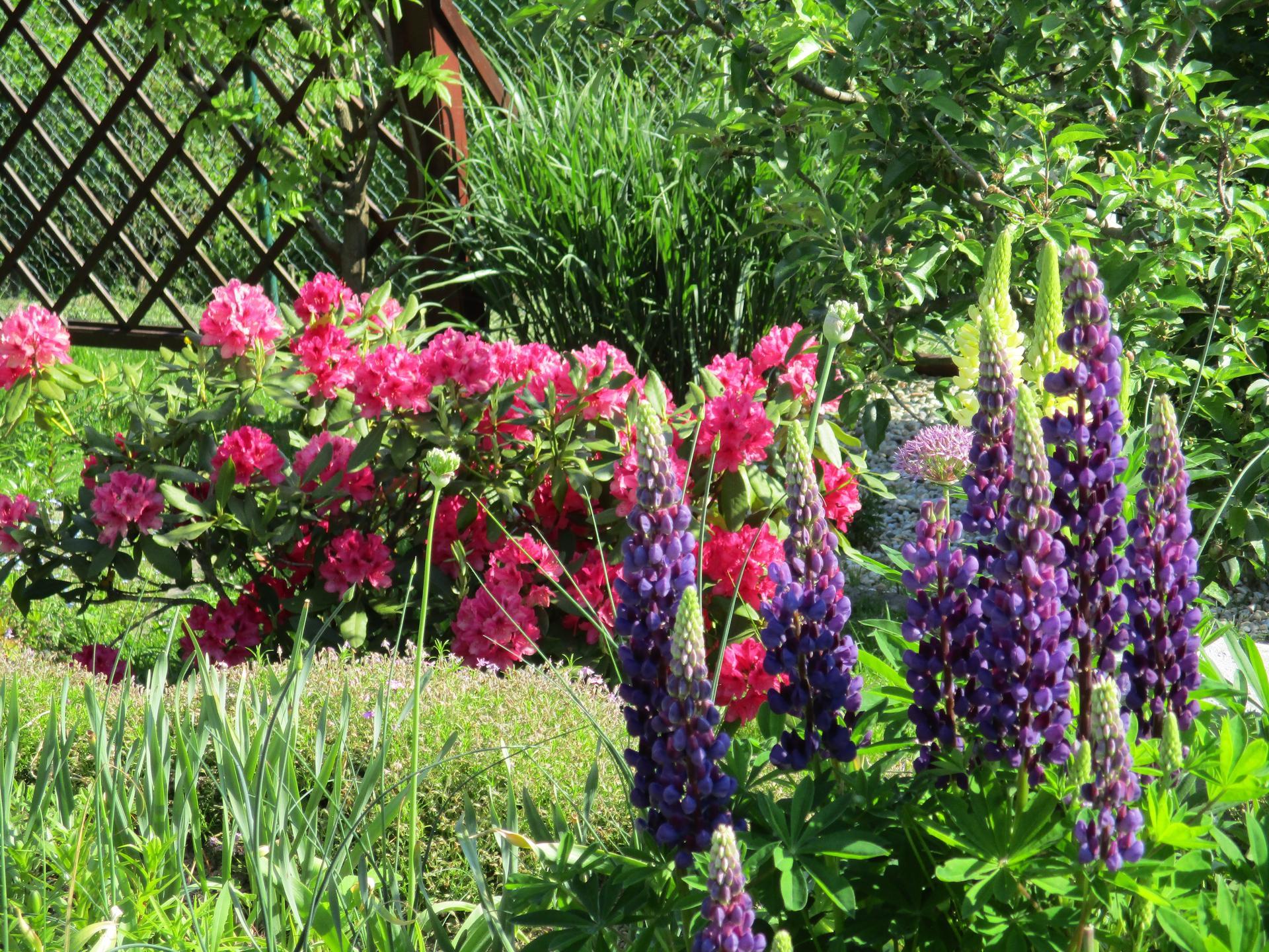 Jar v našej záhrade - Obrázok č. 83