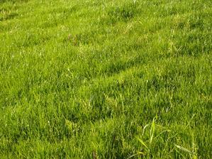 Travička zelená!