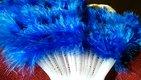 Vejár královská modrá,