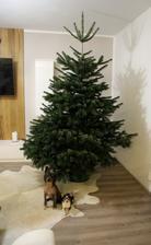 a naši dva pyšní dárečci pod stromem:-D
