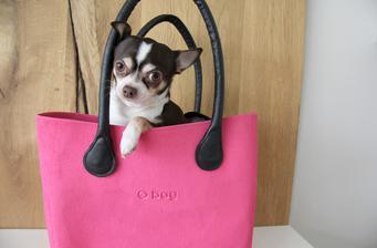 Podle výrazu poznáte, že můj pes byl v kabelce poprvé a naposledy :-D