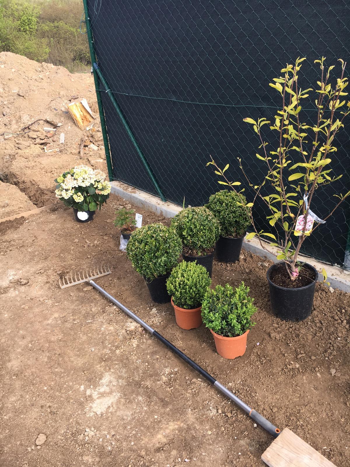 Exteriér domu snů - Buxusy budou jednotne velký a místo magnolie tam bude převislý jehličnan salix