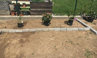 Trávina, hortenzie, pivonka