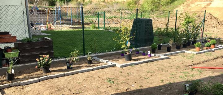 Tráva, hortenzie, pivonka, tráva ... magnolie, levandule, picea a dvě pivonky, bovkovisne a buxusy