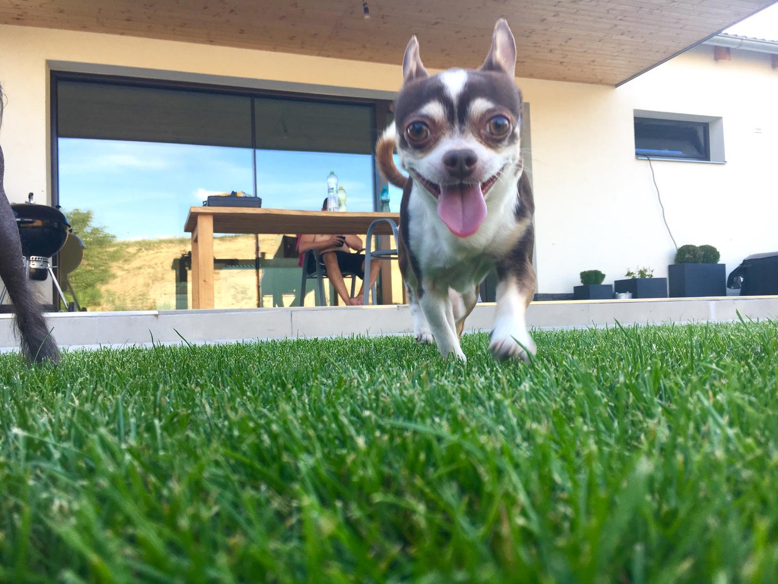 Exteriér domu snů - Lucky tu trávu prostě miluje a já miluju jeho :-D