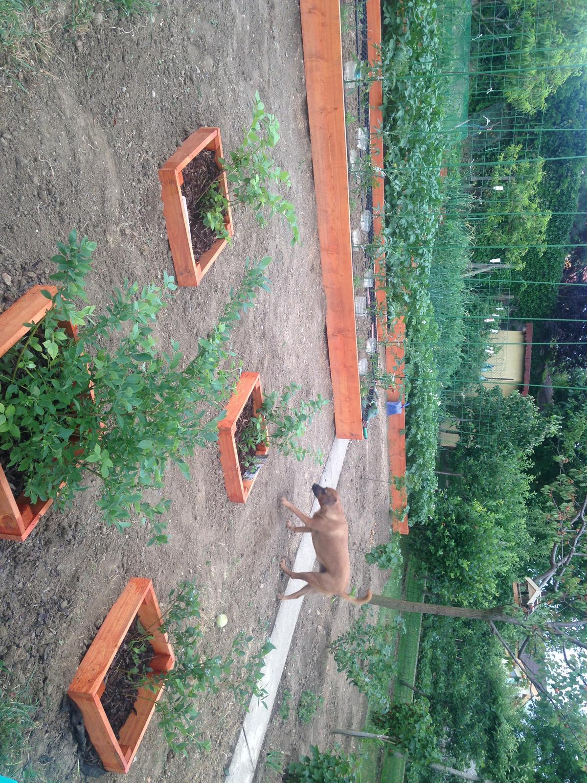 @cickamica my sme vykopali... - Obrázok č. 1