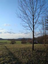 hraniční strom :), stojí přesně na hranici mezi pozemkama:)