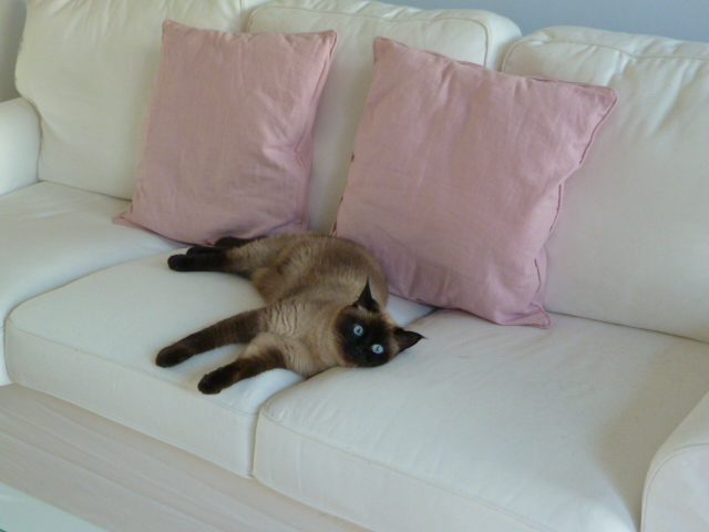 Na venkově.. - Zara, thajská kočka-masáže sice nedělá, ale i tak je to miláček rodiny:-)