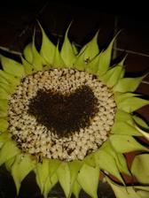 slnečnice krásne v každej podobe