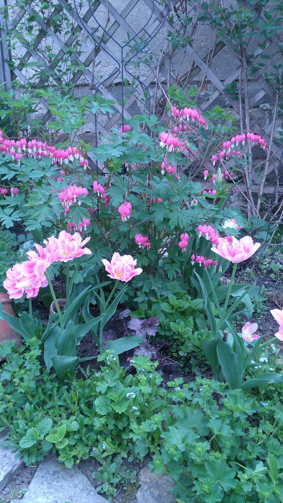 Z našej záhradky - Toto milujem, moja srdcovka : -)