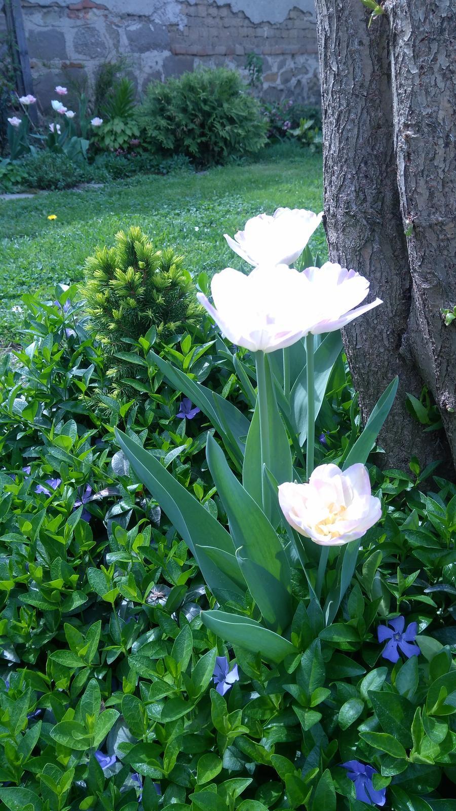 Z našej záhradky - Obrázok č. 235