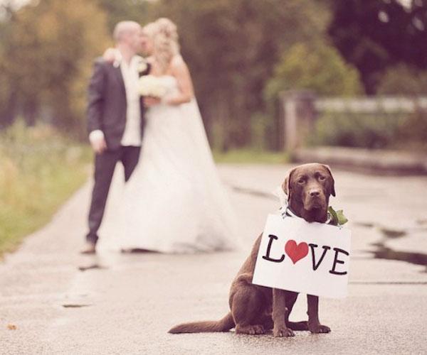Zvieratká na svadbe 🐾 - Obrázok č. 3