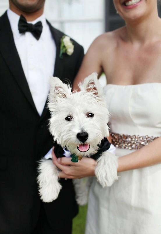 Zvieratká na svadbe 🐾 - Obrázok č. 7