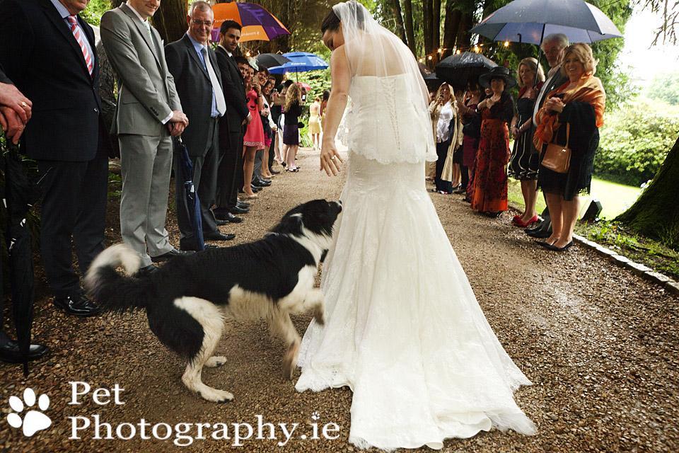 Zvieratká na svadbe 🐾 - Obrázok č. 8
