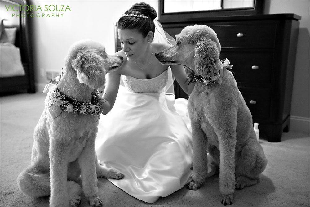Zvieratká na svadbe 🐾 - Obrázok č. 12