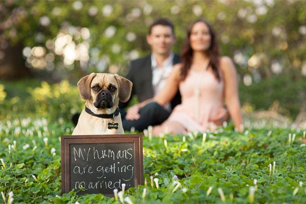 Zvieratká na svadbe 🐾 - Obrázok č. 15