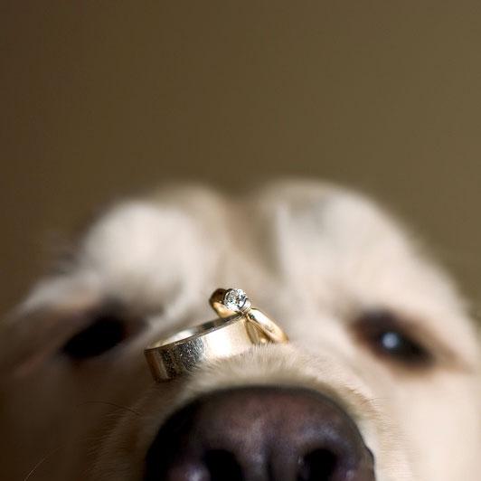 Zvieratká na svadbe 🐾 - Obrázok č. 1