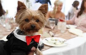 Zvieratká na svadbe 🐾 - Obrázok č. 19