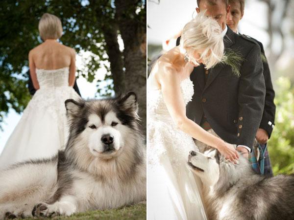 Zvieratká na svadbe 🐾 - Obrázok č. 20