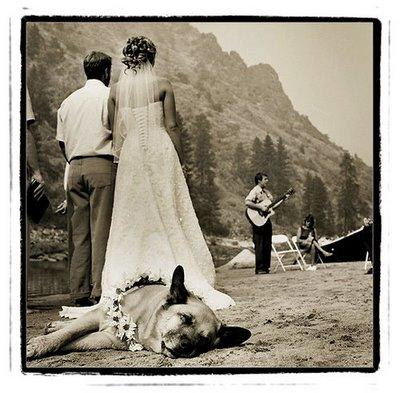 Zvieratká na svadbe 🐾 - Obrázok č. 22