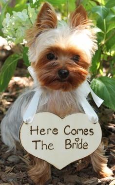 Zvieratká na svadbe 🐾 - Obrázok č. 28