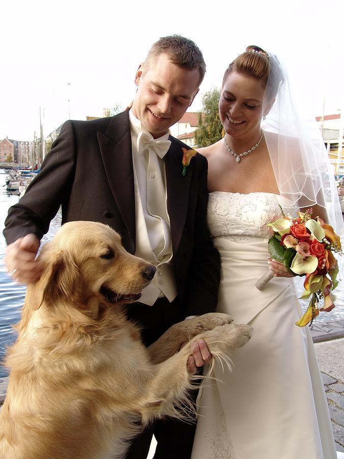 Zvieratká na svadbe 🐾 - Obrázok č. 32