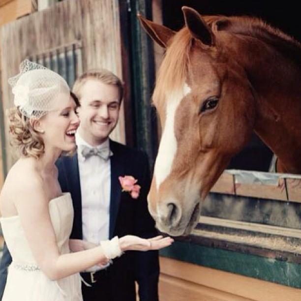 Zvieratká na svadbe 🐾 - Obrázok č. 34