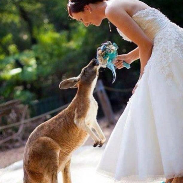 Zvieratká na svadbe 🐾 - Obrázok č. 35