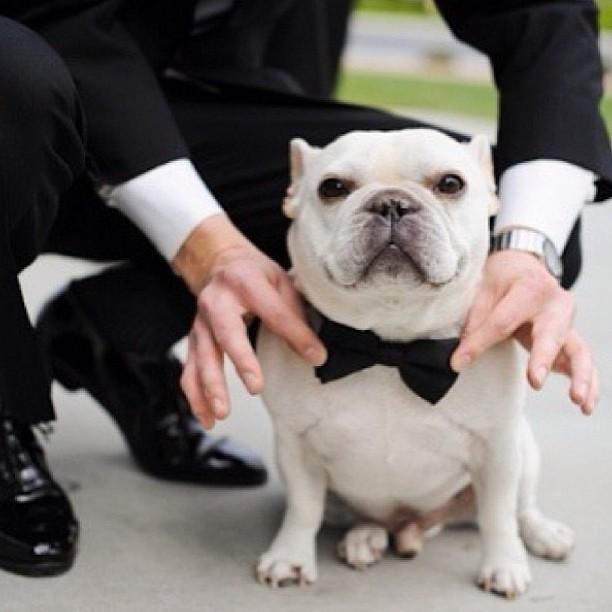 Zvieratká na svadbe 🐾 - Obrázok č. 36