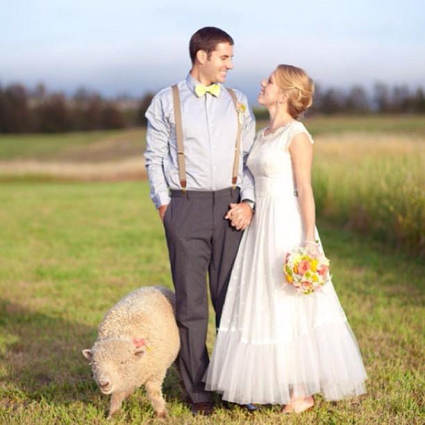 Zvieratká na svadbe 🐾 - Obrázok č. 37