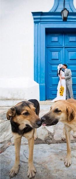 Zvieratká na svadbe 🐾 - Obrázok č. 38