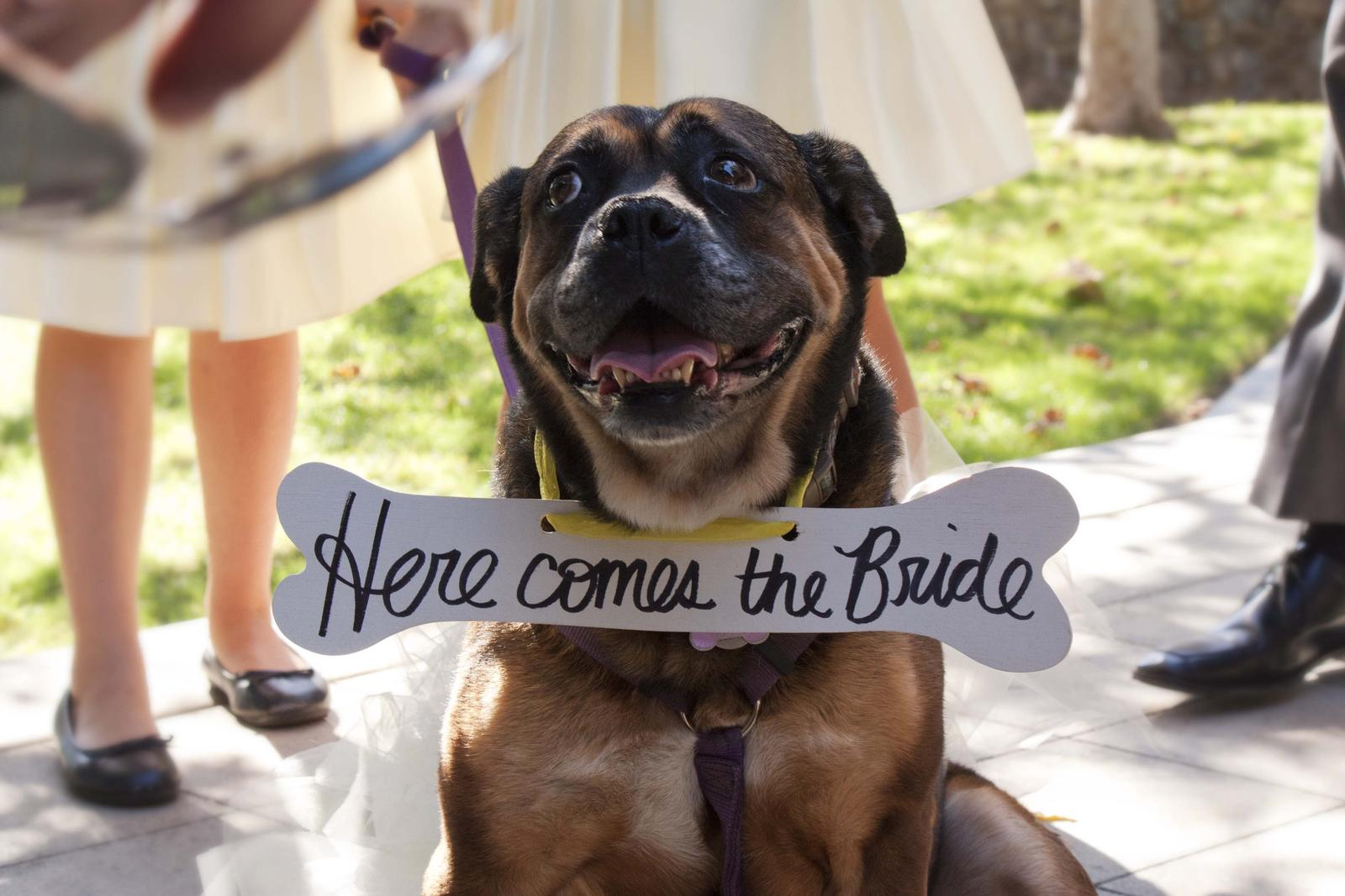 Zvieratká na svadbe 🐾 - Obrázok č. 40