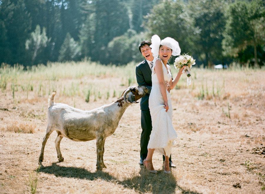 Zvieratká na svadbe 🐾 - Obrázok č. 41