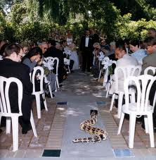 Zvieratká na svadbe 🐾 - Obrázok č. 45