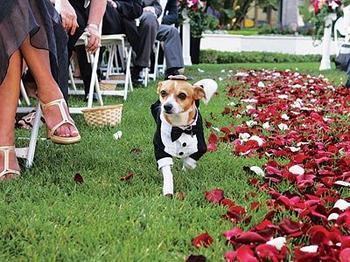 Zvieratká na svadbe 🐾 - Obrázok č. 47