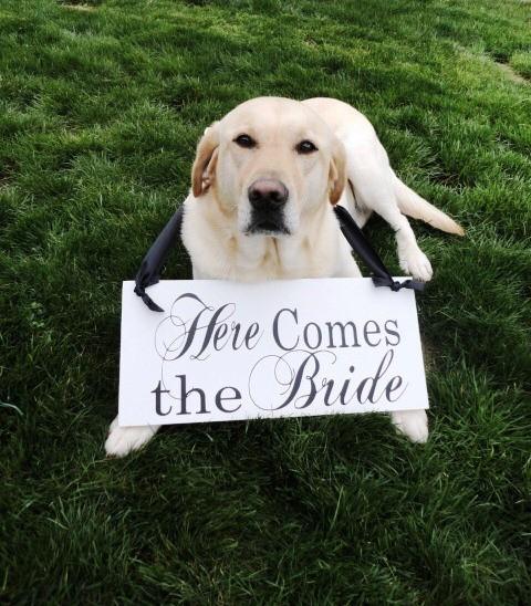 Zvieratká na svadbe 🐾 - Obrázok č. 2