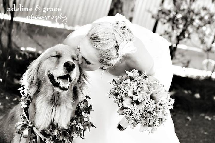 Zvieratká na svadbe 🐾 - Obrázok č. 44