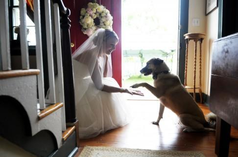 Zvieratká na svadbe 🐾 - Obrázok č. 51