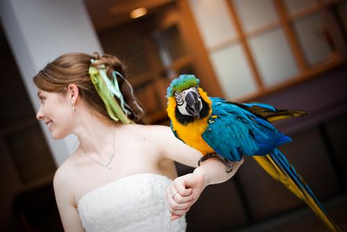 Zvieratká na svadbe 🐾 - Obrázok č. 57
